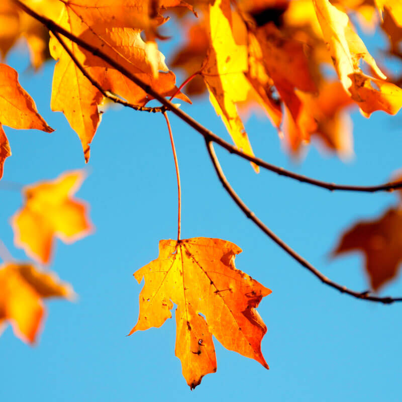 Fall cleanup services mi 1