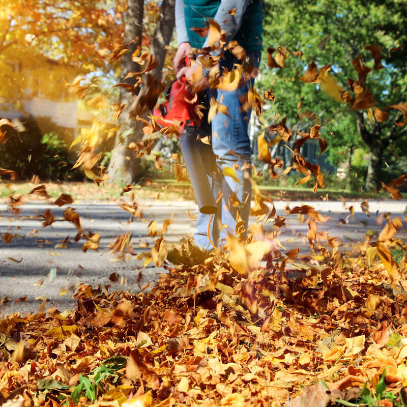 Fall cleanup services mi 2